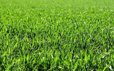 Græsarmering af din græsplæne sikrer dræn af overfladevand
